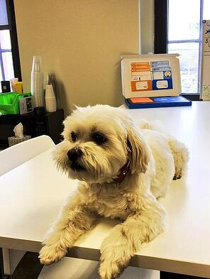 When you got your ClearView Social Welcome Kit, did it include a copy of our office dog Mickey? No, only the original in our office has him.